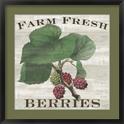 Farm Fresh Berries I