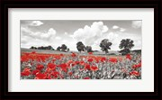 Poppies and Vicias in Meadow, Mecklenburg Lake District, Germany