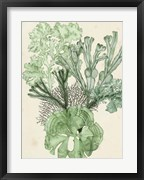 Seaweed Composition I