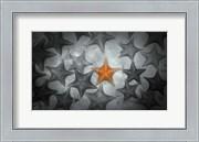 Pop of Color Orange Starfish