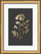 Botanical Gold on Black II