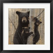 Black Bear Mother and Cubs - Mama Bear