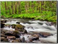 Framed Water Flows At Straight Fork, North Carolina