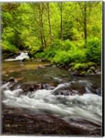 Framed Siuslaw National Forest, Sweet Creek, Oregon