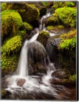 Framed Creek In Sol Duc Valley, Washington