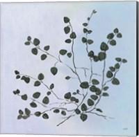 Framed Botanical Study VII Blue