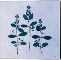 Framed Botanical Study IV Blue