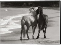 Framed Young Mustangs on Beach