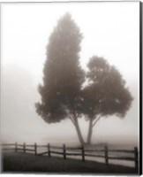 Framed Cedar Tree and Fence