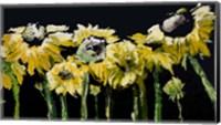 Framed Sunflower Field on Black