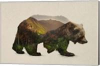 Framed North American Brown Bear