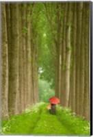 Framed Two Umbrellas, Belgium