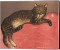 Framed Cat on a Cushion