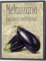Framed Melanzana Solanum Melongena