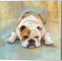 Framed Bulldog With The Blues