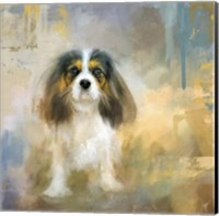 Framed Attentive Cavalier