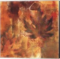 Framed Flow of Maple