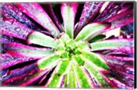 Framed Bright Exotic I