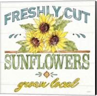 Framed Sunflower Fields III