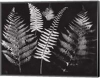 Framed Nature by the Lake Ferns I Black Crop