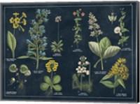Framed Botanical Floral Chart I Dark Blue