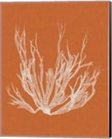Framed Seaweed Pop I