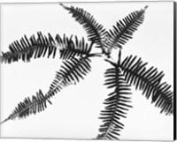 Framed Fern Leaves