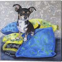 Framed Chihuahua Pillows II