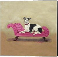 Framed Italian Greyhound on Pink