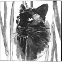 Framed Still Cat I