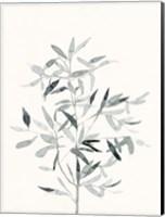 Framed Delicate Sage Botanical VI