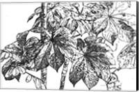 Framed Botanical BW IV
