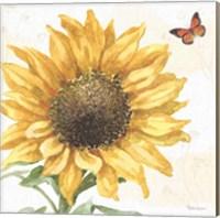 Framed Sunflower Splendor IX