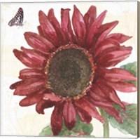 Framed Sunflower Splendor X