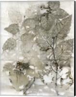 Framed Birch Leaves I