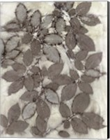 Framed Rose Leaves
