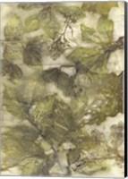 Framed Eco Print III