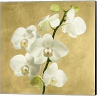 Framed Orchids on a Golden Background II