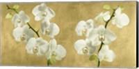 Framed Orchids on a Golden Background