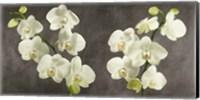 Framed Orchids on Grey Background
