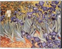 Framed Irises in the Garden, Saint-Remy, c.1889
