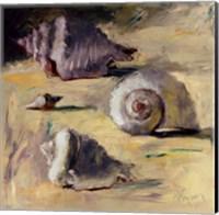 Framed Shells I