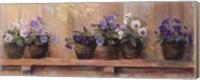 Framed Violets in Pots