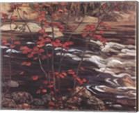 Framed Red Maple