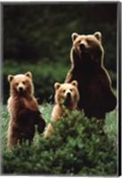Framed Bears