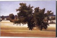 Framed Montpellier Oak