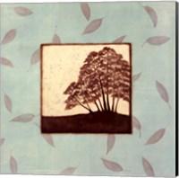 Framed Birch