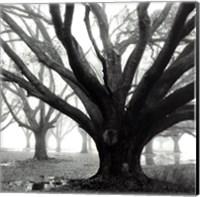 Framed Oak Grove, Winter
