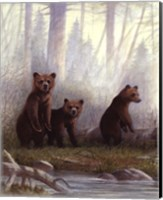 Framed Grizzly Cubs