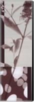 Framed Botanica 10